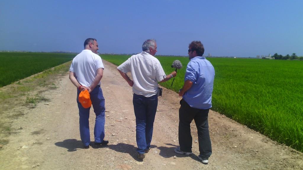 Arroceando traspasa fronteras entre arrozales en l'Albufera