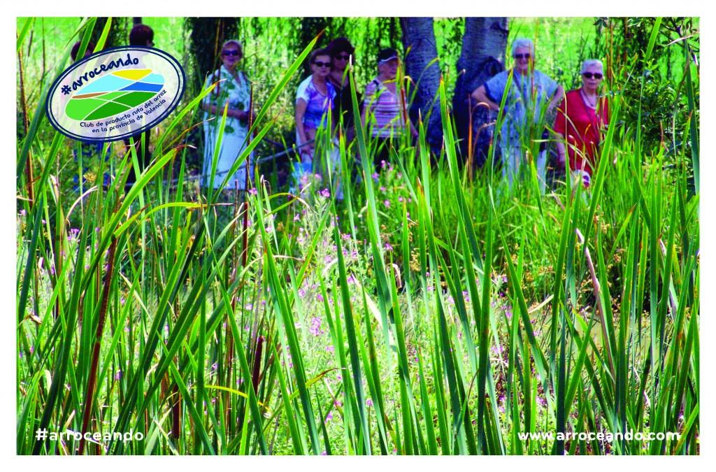 Visita la llacuna del Samaruc con el ayuntamento de algemesi