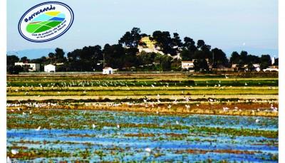 Un paseo por el arrozal con el ayuntamiento de Sueca