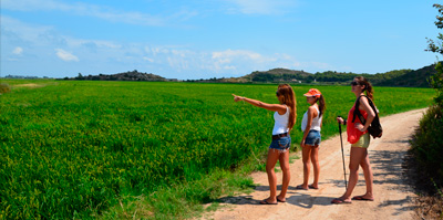 Walk and enjoy - Amongst rice fields