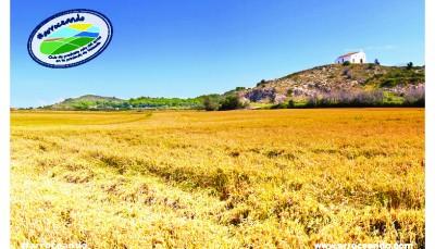 Visita el museo del arroz y recorre las rutas entre arrozales de cullera con cullera turismo